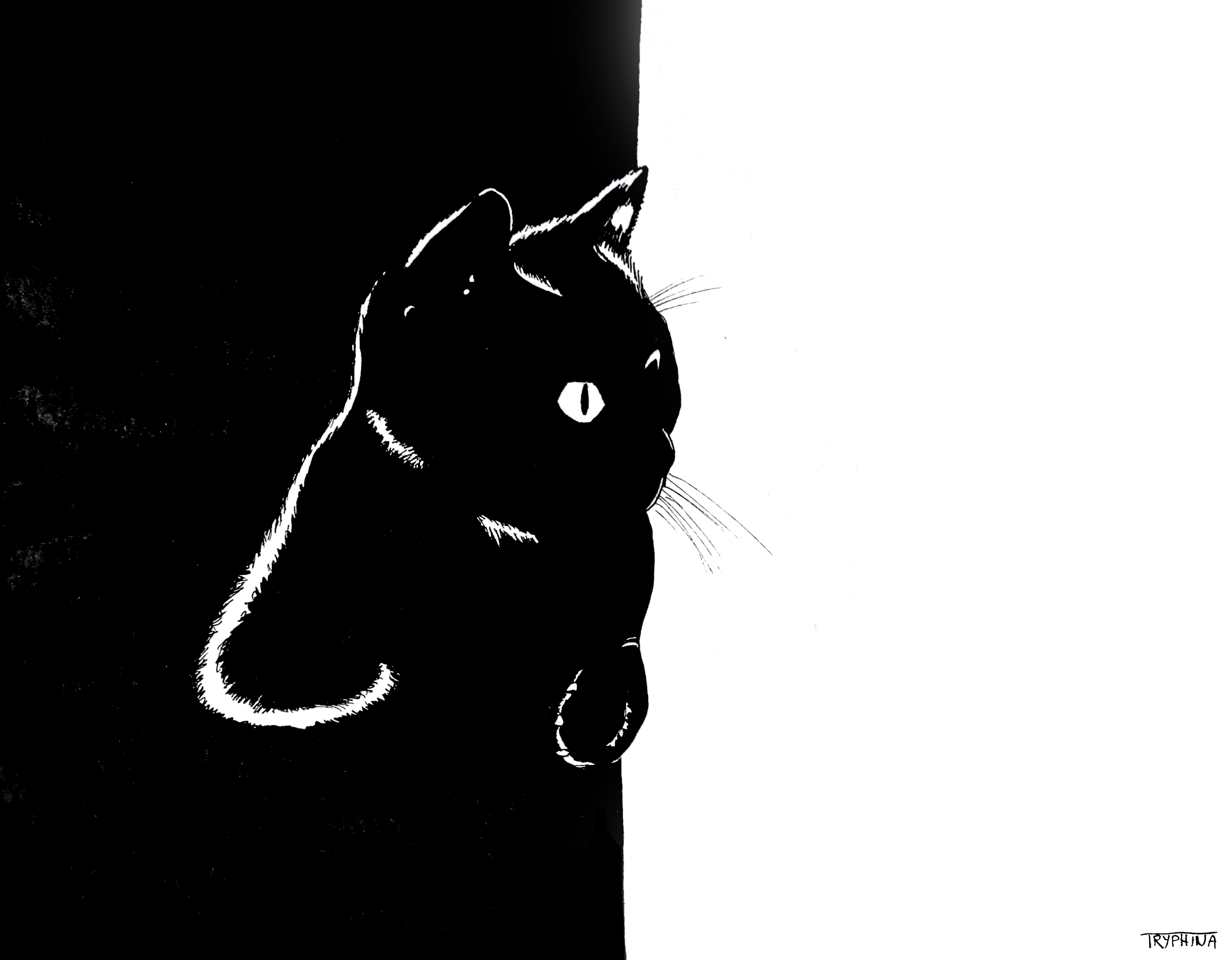 FINAL_claudias_cat