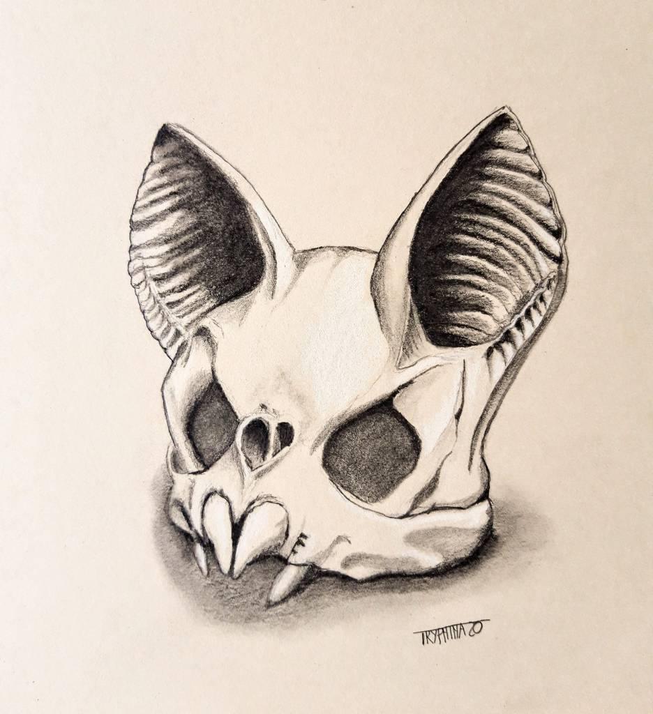 drawing of a bat skull