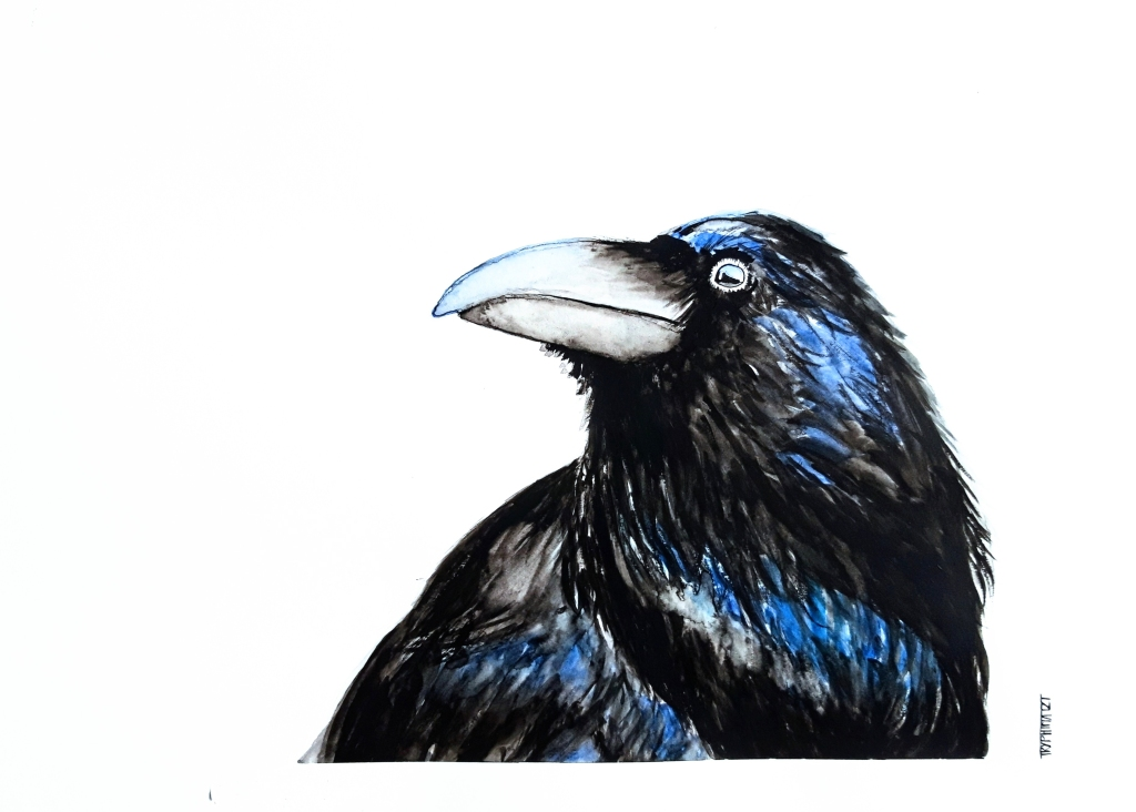 watercolour painting of a raven